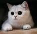 [:cat3]